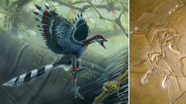 Da li su ptice potomci dinosaurusa?