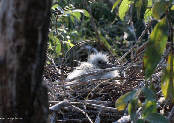 Gniježđenje i migracija