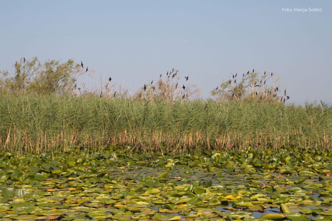 Istraživačke priče o problemima NP Skadarsko jezero