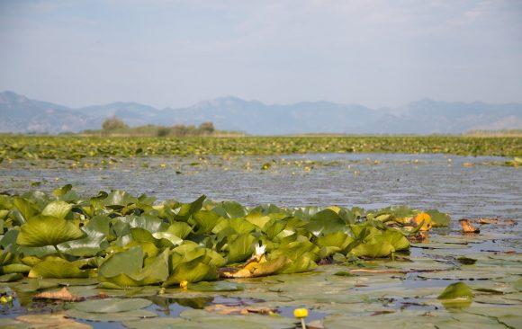 Konkurs za istraživačke radove o problemima                                                                očuvanja Skadarskog jezera