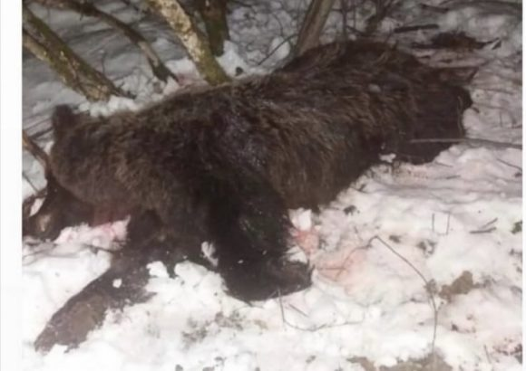 Inicijativa za hitno uvođenje moratorijuma na lov
