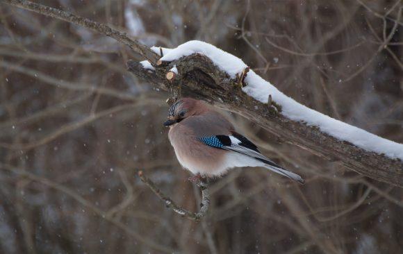 Ptičji vodič za preživljavanje zime u 5 koraka