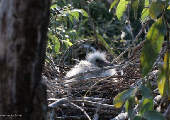 Nesting and migration