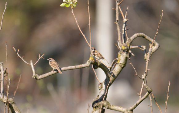 Prva pomoć tokom zime: hranilice za ptice