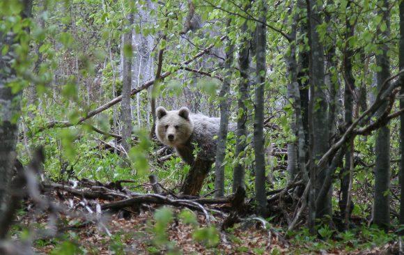 Peticija za hitno donošenje propisa kojim se uspostavlja lovostaj
