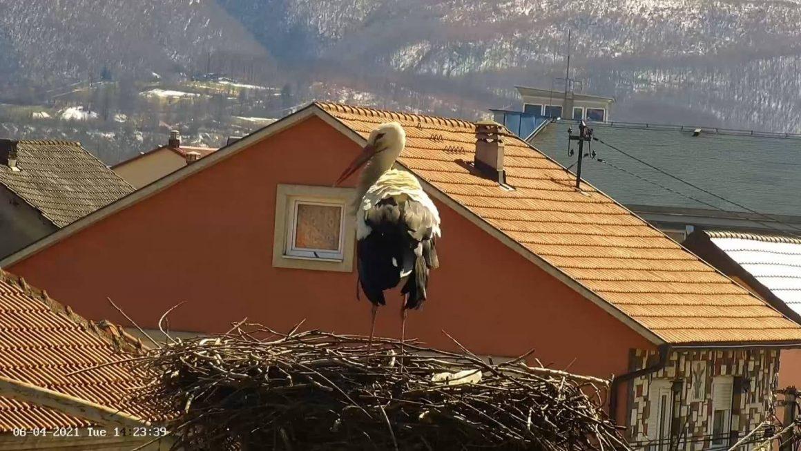Udvaranje ptica i njihovi rituali