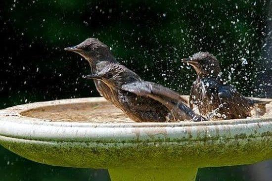 Kako napraviti pojilice za ptice