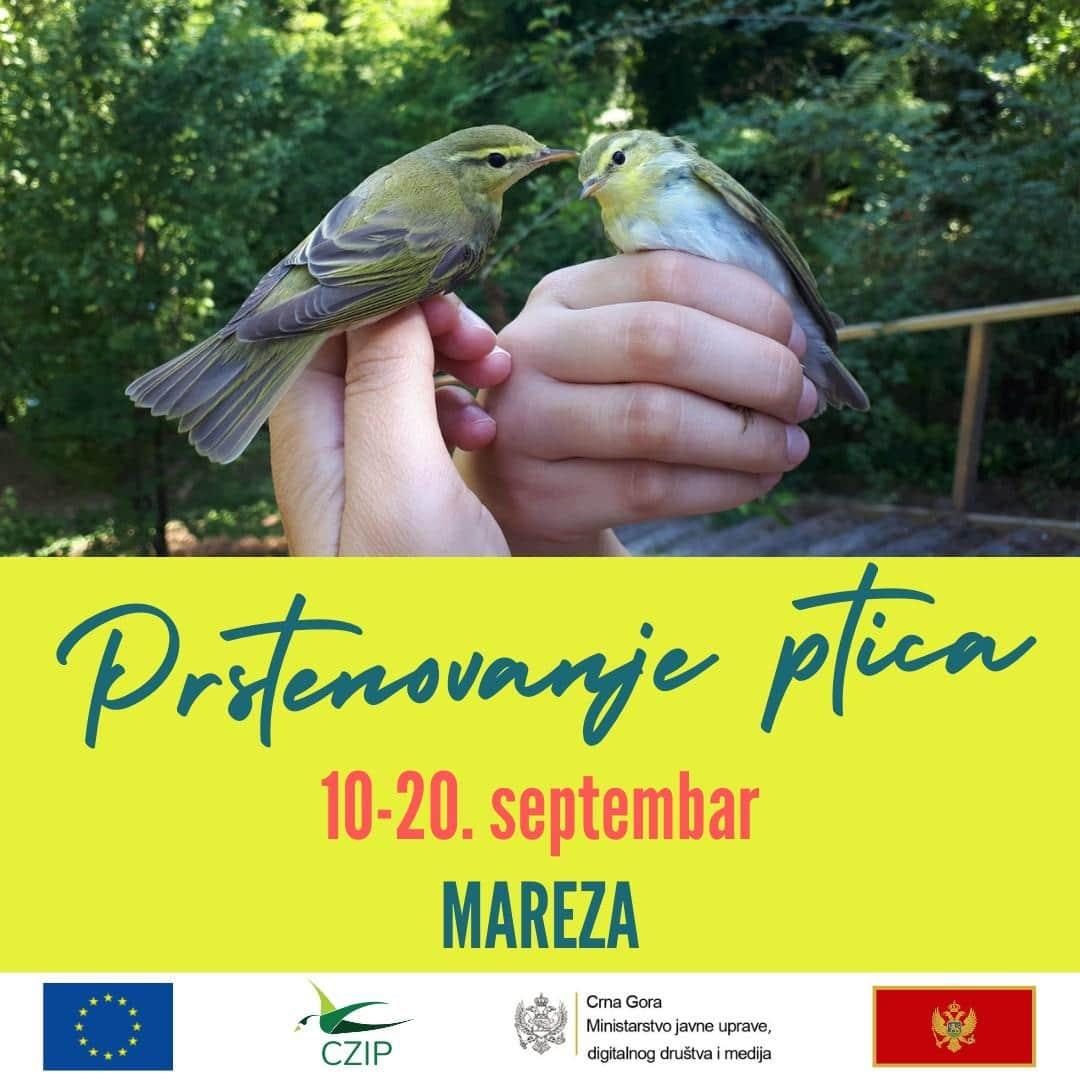 Prstenovanje ptica na edukativnoj stanici Mareza