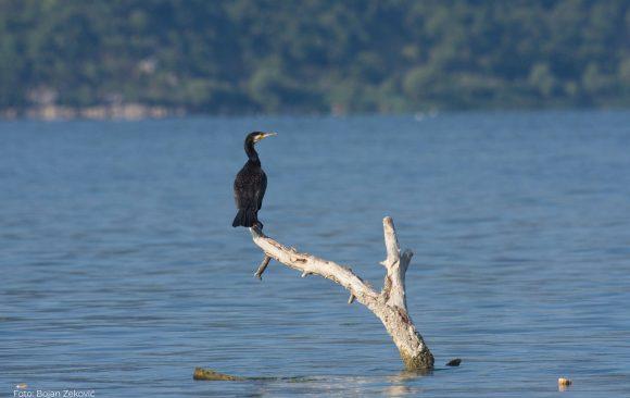 Poziv za prekogranični jesenji kamp na Skadarskom jezeru