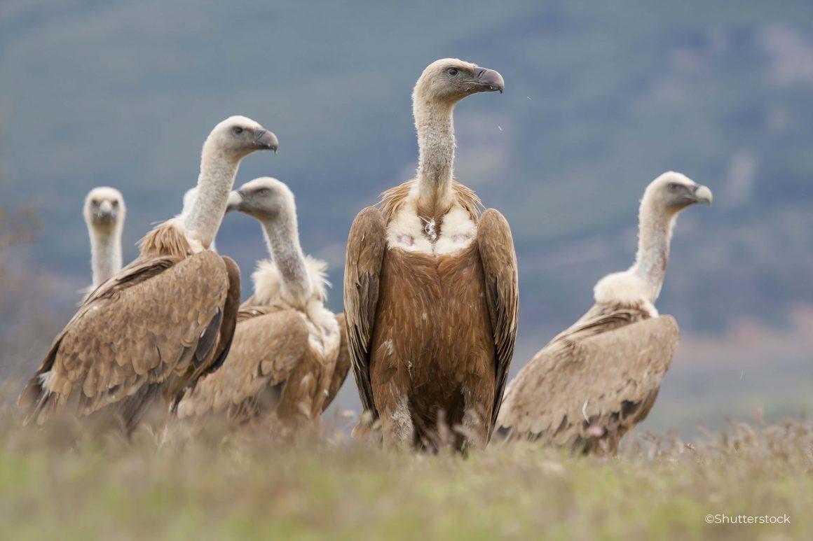 Objavljena nova Evropska crvena lista ptica: Svakoj petoj  vrsti ptice u Evropi prijeti izumiranje
