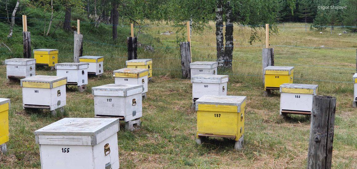 Instalirane dvije električne ograde za zaštitu pčelinjaka
